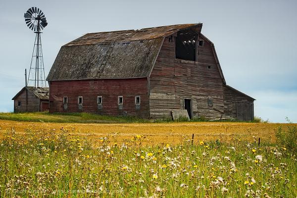 Barn with Windpump, Rural Saskatchewan