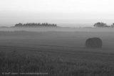 Morning Fog and Hay Bales