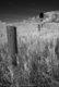 Old Barn in Fall, Virden, Manitoba - Infrared IR