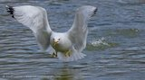 Gull Pond Takeoff