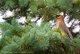 Wildlife - Birds and Animals