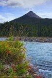 Jasper 2008
