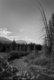 Banff Landscape B&W