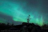 Libau Aurora
