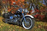 Sprong Classic Harley